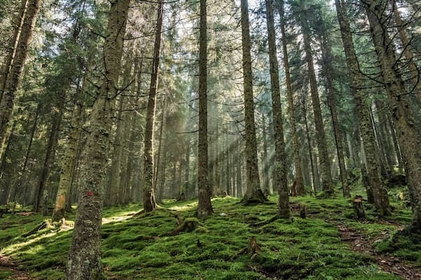 bosque empresa